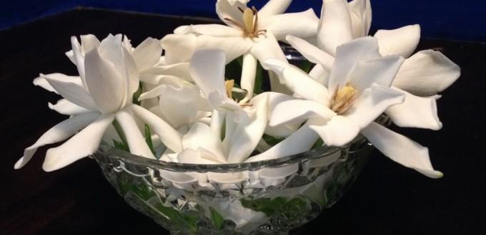gardenia in bowl